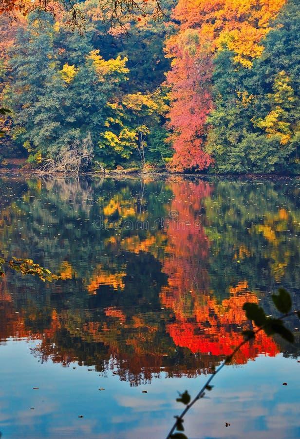 Couleurs variées d'automne images stock
