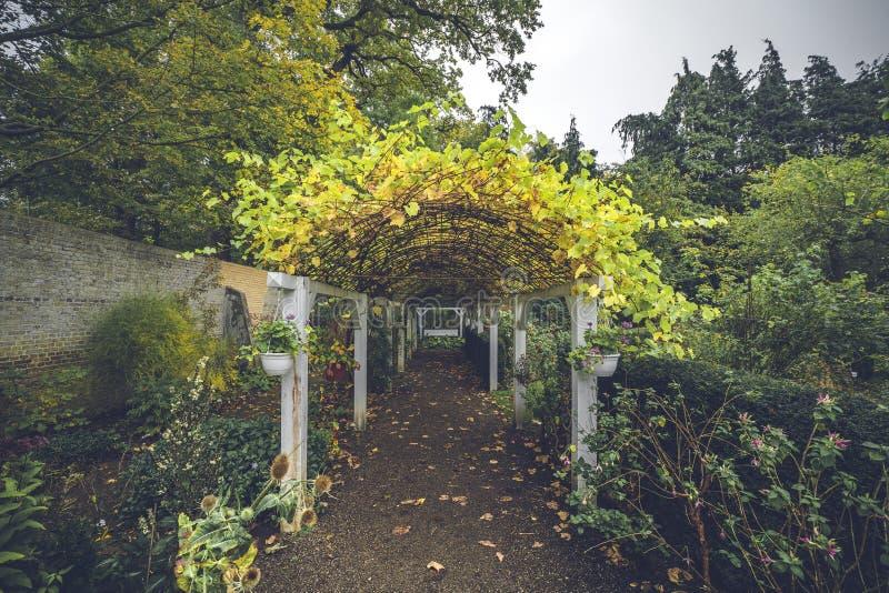 Couloir de jardin en automne avec des feuilles d'automne images libres de droits