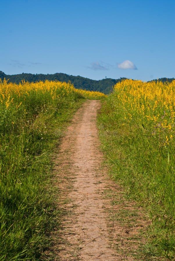 Couloir jaune de fleurs photos libres de droits