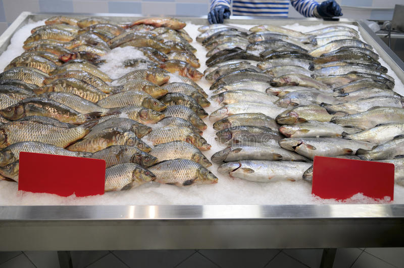 Counter fish store. Carp and trout on ice at the counter of fish store royalty free stock photo