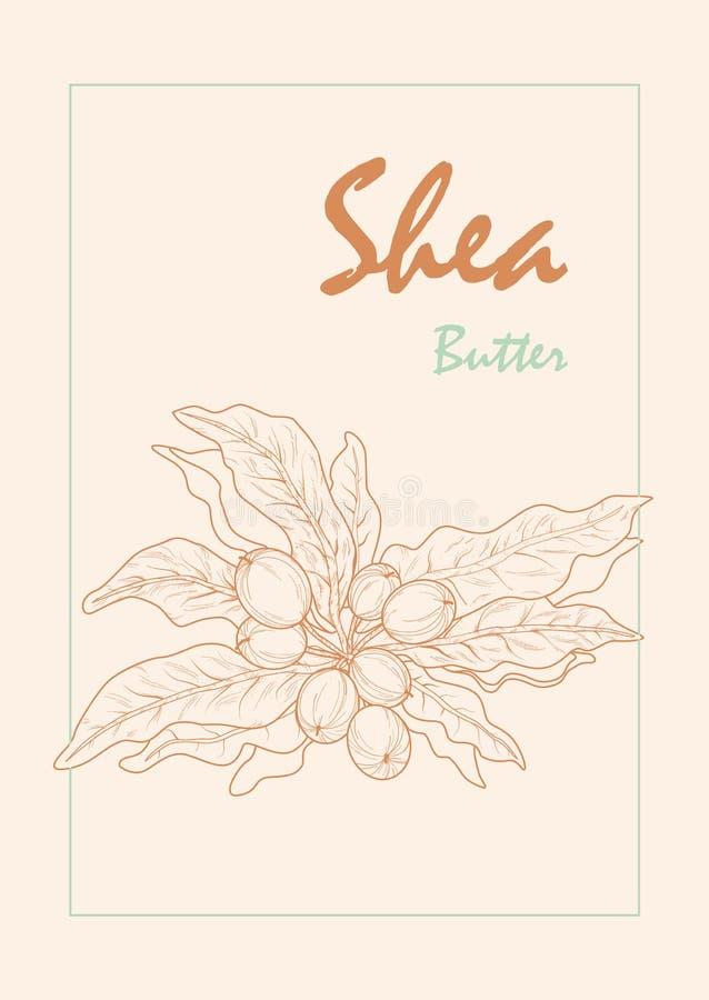 Counterstormbeeld van sheaboomnoten in zachte kleuren stock illustratie