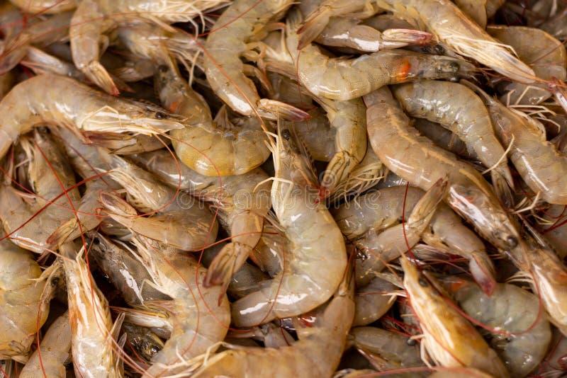 Countless fresh shrimp. Fresh marine food. Proteins of animal origin stock photography