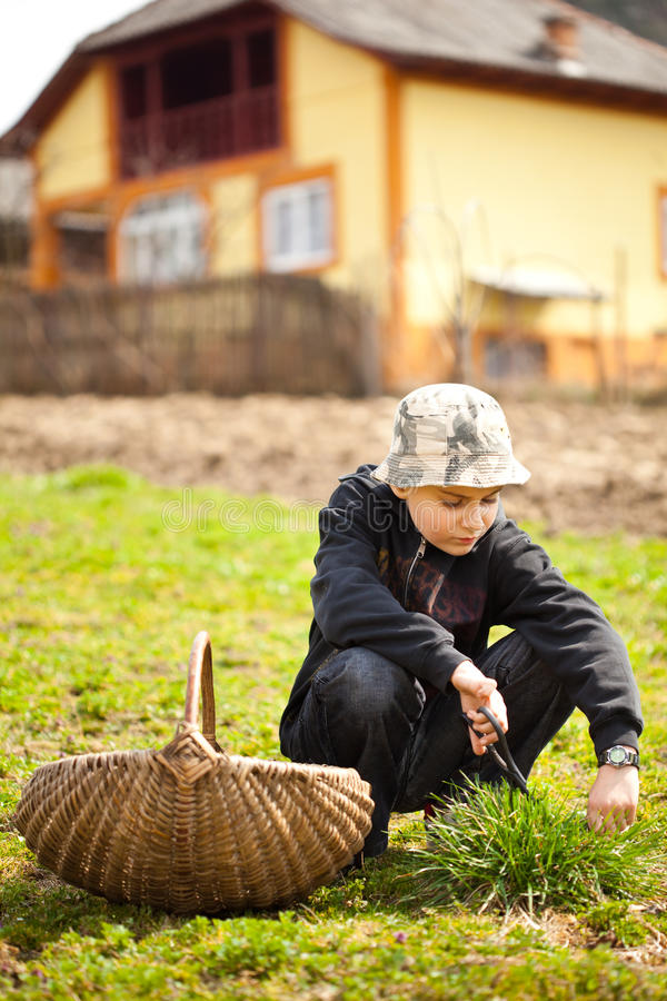 Country boy cutting grass for animals stock image
