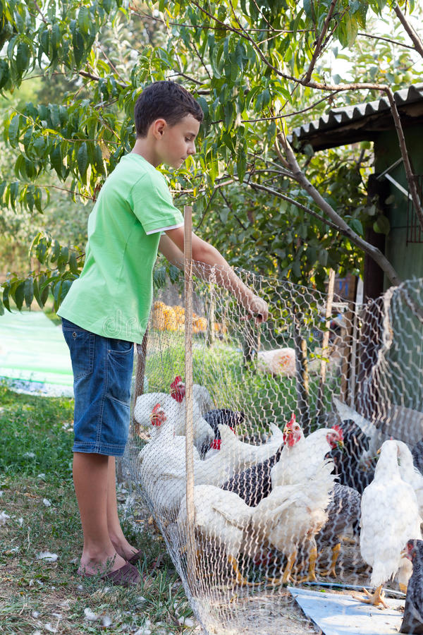Country boy feeding chickens royalty free stock photos