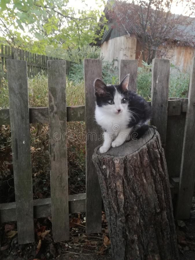 Country cat stock photos