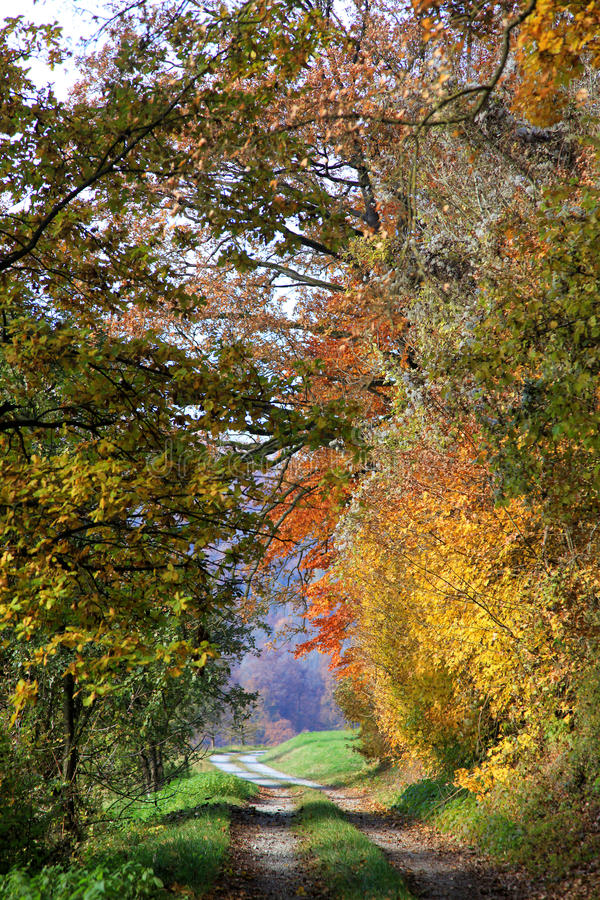 Country dirt road through autumnal forest. Country dirt road through autumnal colored forest stock photos