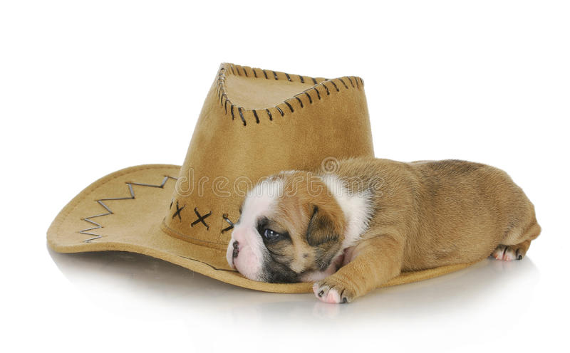 Download Country dog stock image. Image of western, holidays, sleeping - 26208629