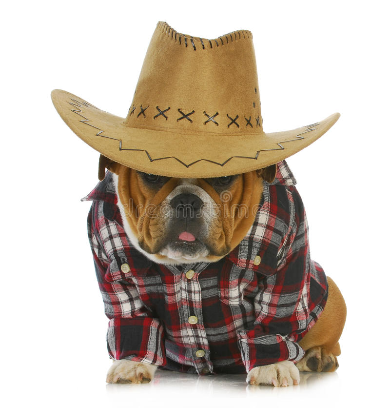 Country Dog Stock Photography