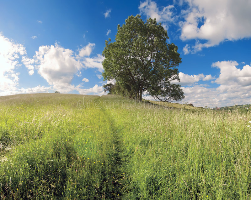 Download Country estate stock image. Image of green, rural, park - 5492227