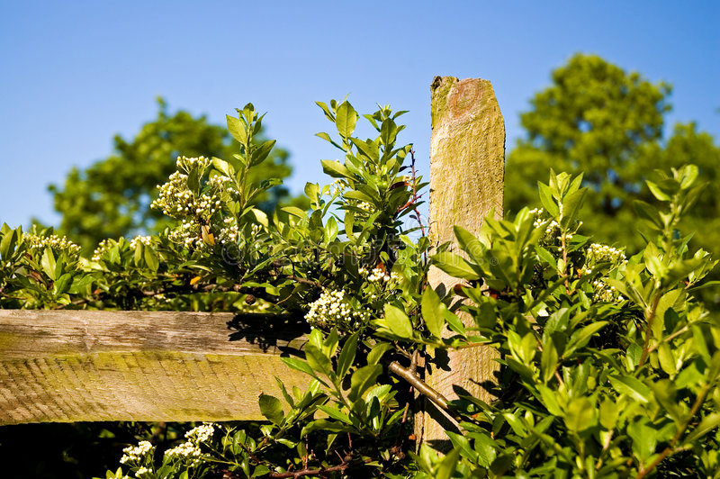 Download Country Fence Post And Vines Stock Photo - Image: 2481830