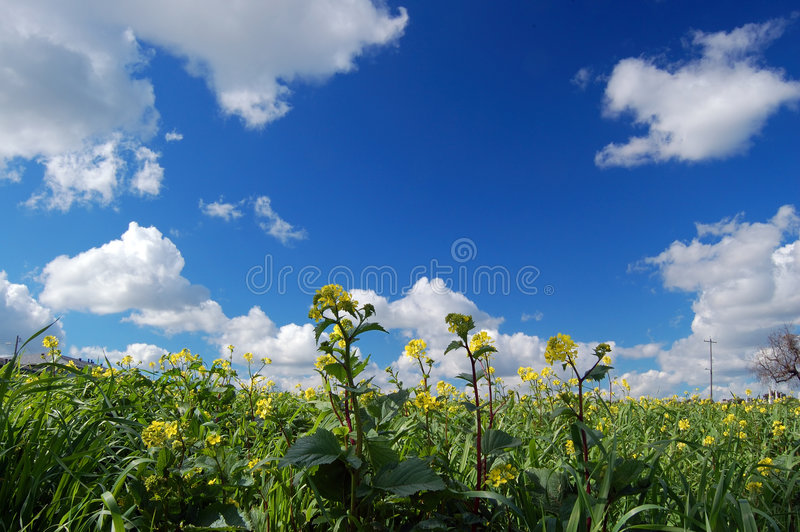 Country field royalty free stock photography