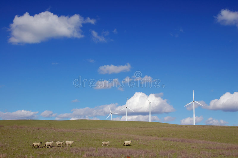Country field royalty free stock photos
