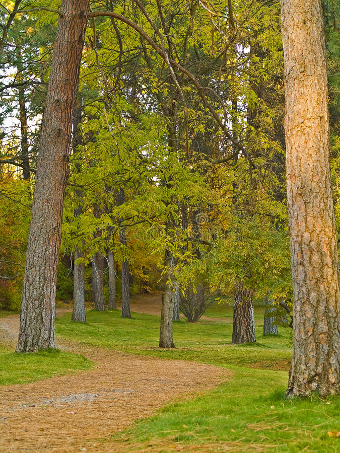 Download Country Forest Foot Path stock image. Image of foliage - 14731155