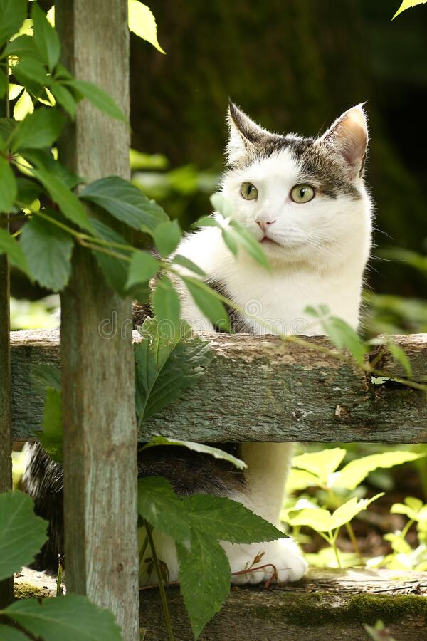 Country funny cat hunting outdoor closeup photo royalty free stock photo