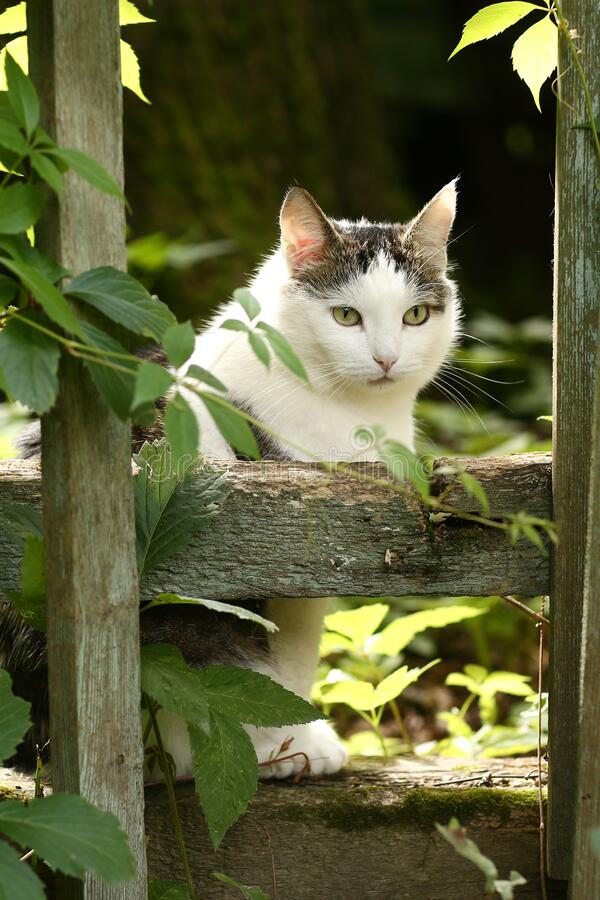 Country funny cat hunting outdoor closeup photo stock images