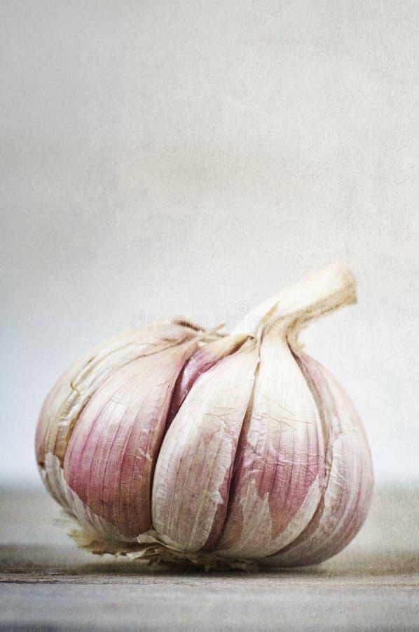 Free Country Garlic Stock Photo - 22821400
