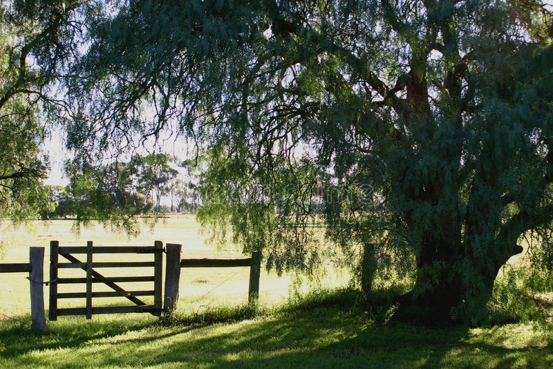 Download Country Gate stock photo. Image of willow, closed, weeping - 168862