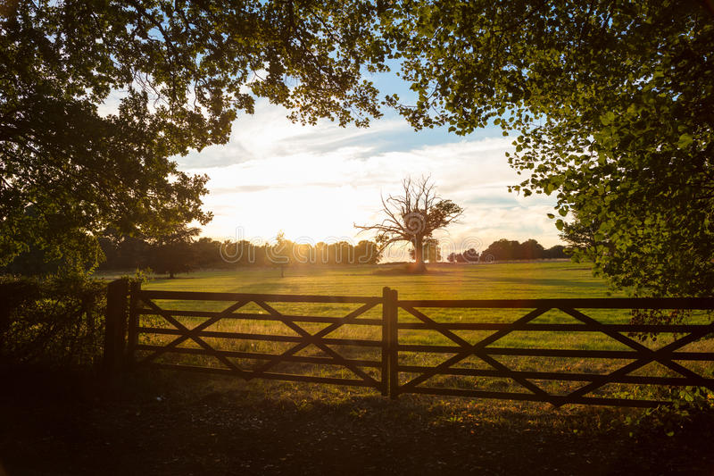 Country Gate and Trees in English Countryside at Sunset or Sunrise stock image