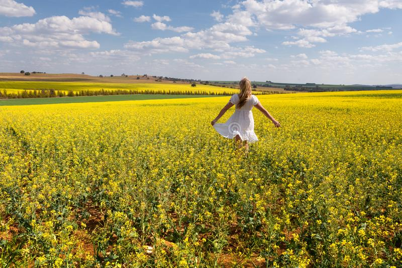 Country girl frollicking in fields of golden canola stock photography