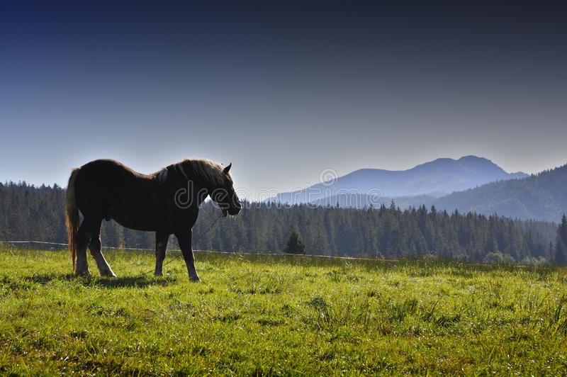 Download Country and horse stock photo. Image of tree, over, blue - 12775808