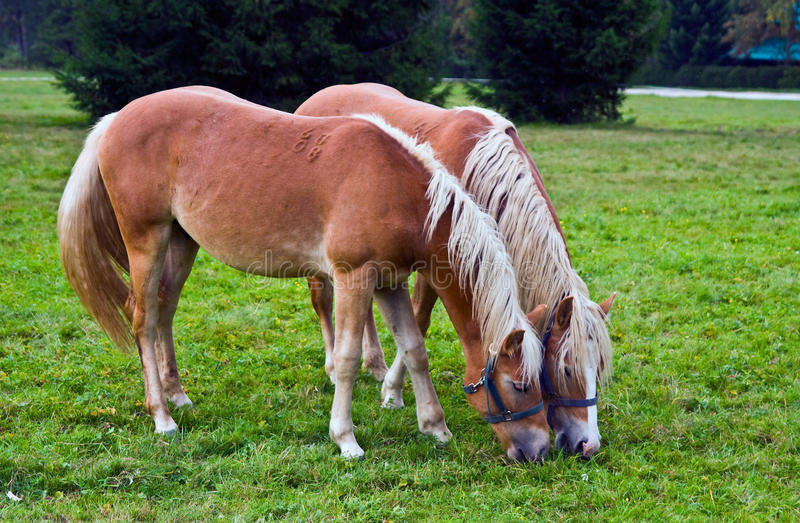 Download Country and horses stock photo. Image of europe, camp - 12775876