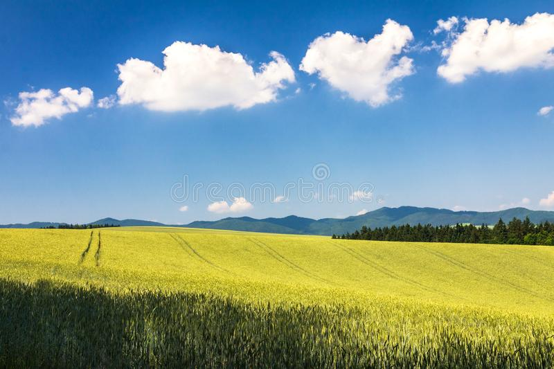 Country landscape with barley field. stock photography