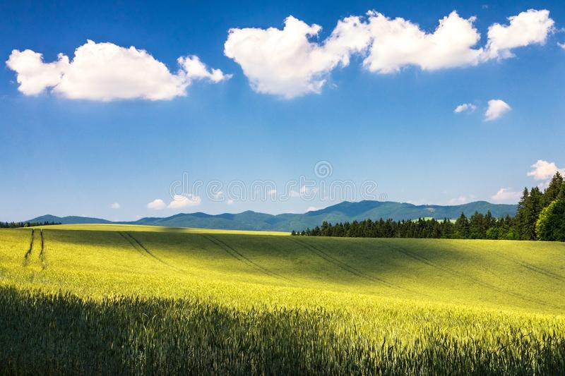 Country landscape with barley field. royalty free stock photo