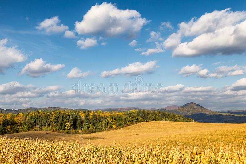 Country landscape with dried corn field on a sunny day. stock photo