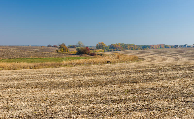 Country landscape with harvested field. Ukrainian country landscape with harvested field royalty free stock photos