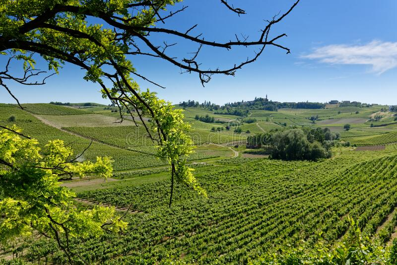 Country landscape of Monferrato Asti, Piedmont, Italy at summer, with vineyards stock images