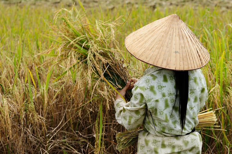 Country landscapes in Vietnam royalty free stock photos