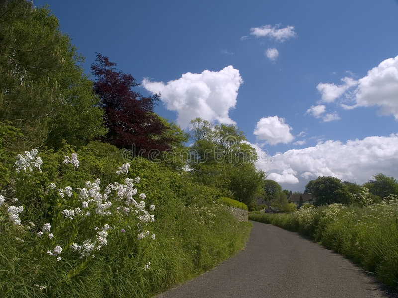 Download Country Lane stock photo. Image of grass, lane, blue, hedge - 135468