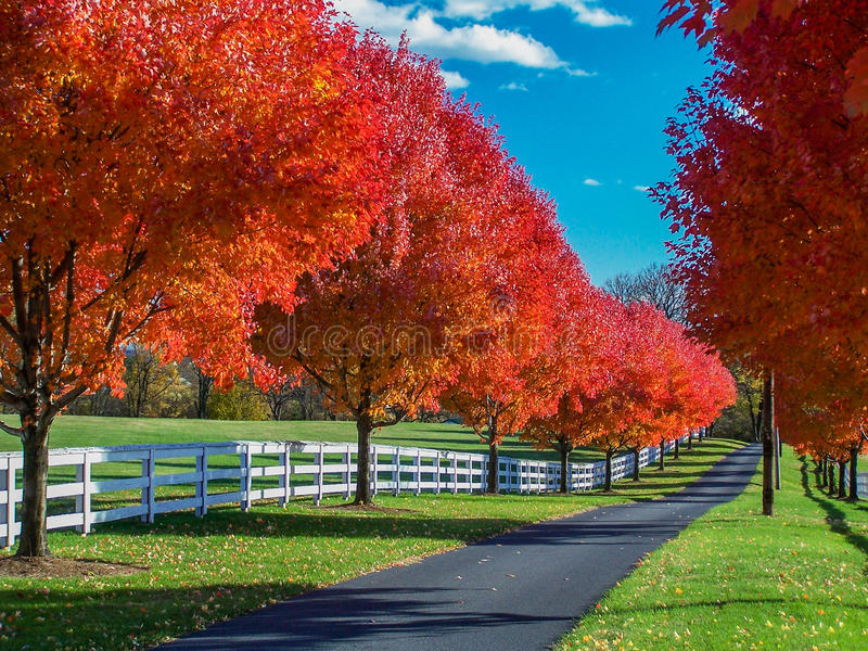 Country Lane Bordered by Spectacular Autumn Foliage and White Fencing. Country lane disappears into the distance as it runs through a grassy farm meadow. Lined royalty free stock photos