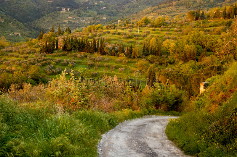 Download Country lane in Italy stock image. Image of serenity, road - 2462147