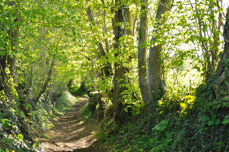 A Country Lane In Normandy Stock Photo