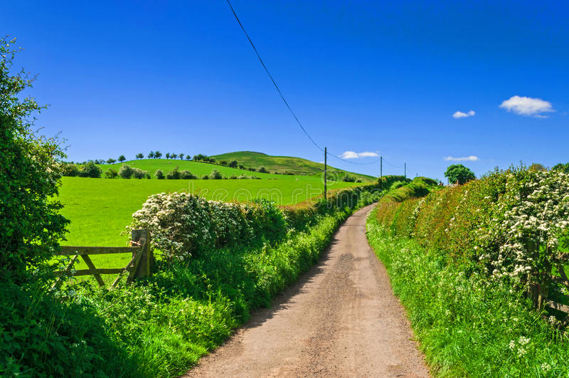 Country Lane,Rural Road. Hedge Lined towards the horizon stock images
