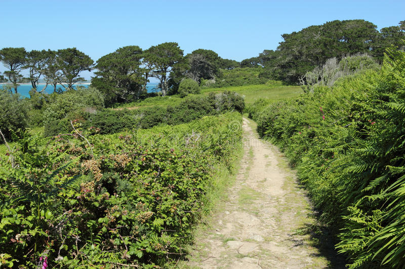 Country lane in St. Mary's Isles of Scilly. stock photo