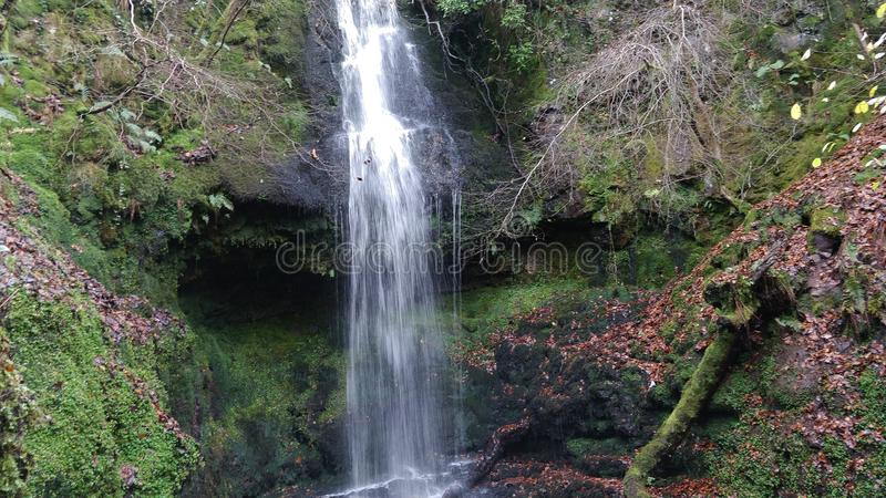 Waterfall surrounded by greenery stock photography
