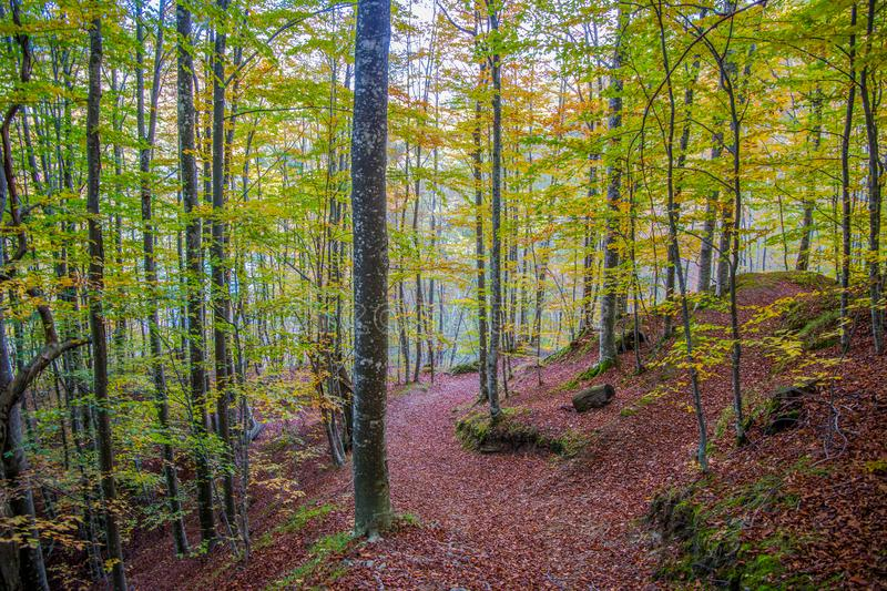 Country path running through the woods on an autumn day, Italy. Country path running through the woods on an autumn day / beech forest royalty free stock photo
