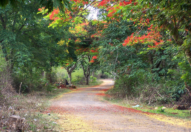Country road. With flowering trees stock image