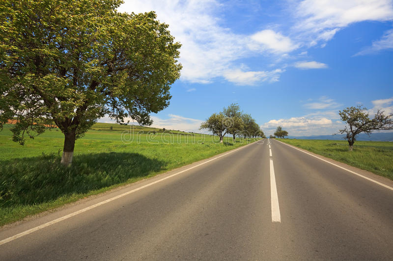 Country road. Straight country road with trees on the side, summer royalty free stock images