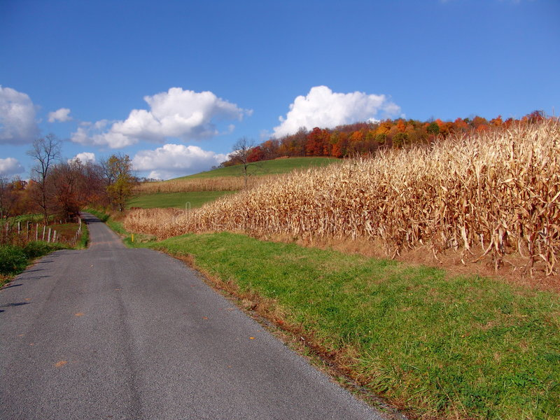 Download Country Road stock image. Image of conservation, fall, colorful - 193705