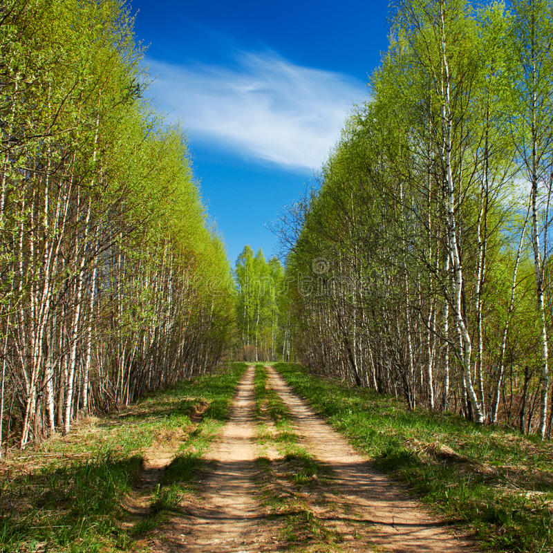 Download Country road stock photo. Image of shade, cloud, summer - 19588102