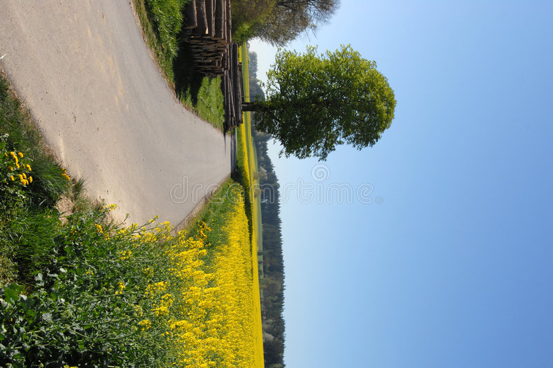 Download Country Road stock image. Image of crop, bavaria, germany - 2304787