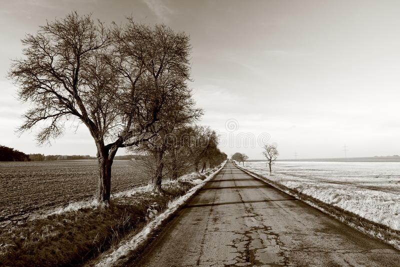 Country road. Surrealistic looking country landscape with a straight road line with trees stock photography