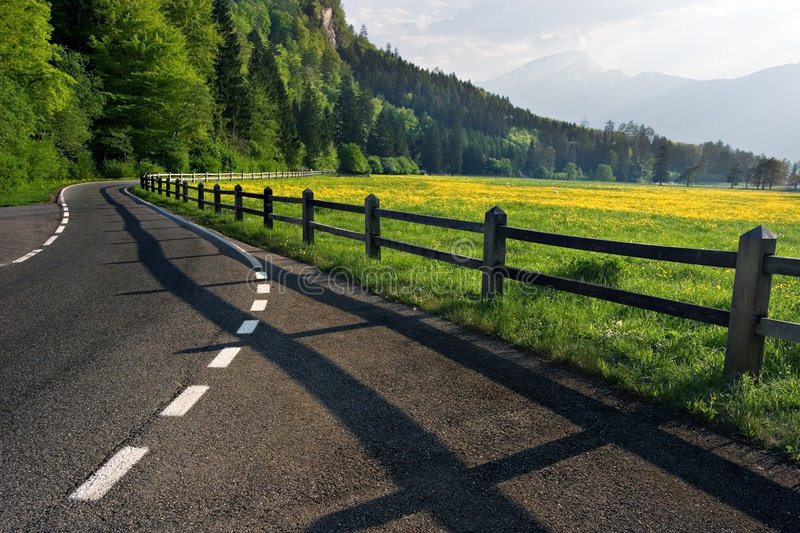 Country Road. A tarmac country road next to a yellow flowered field in Switzerland stock image
