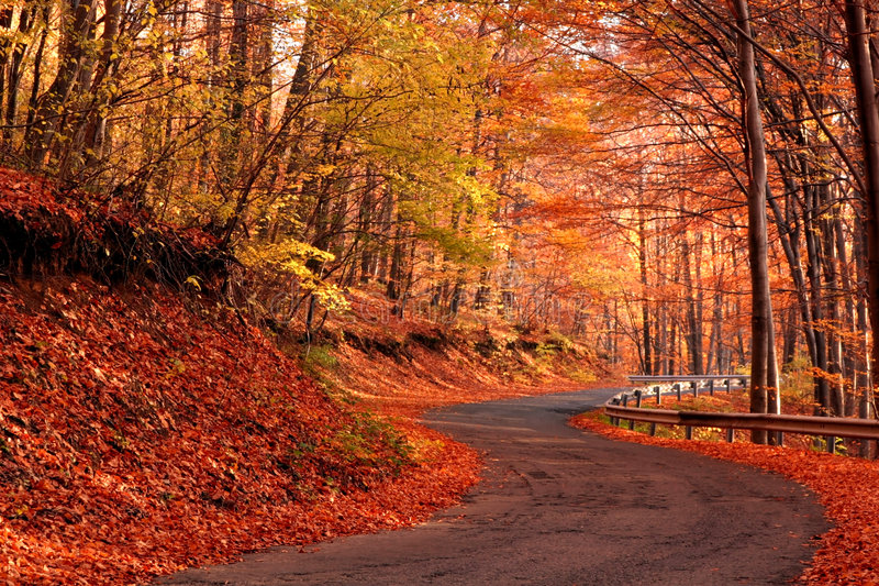 Country road in autumn royalty free stock photos