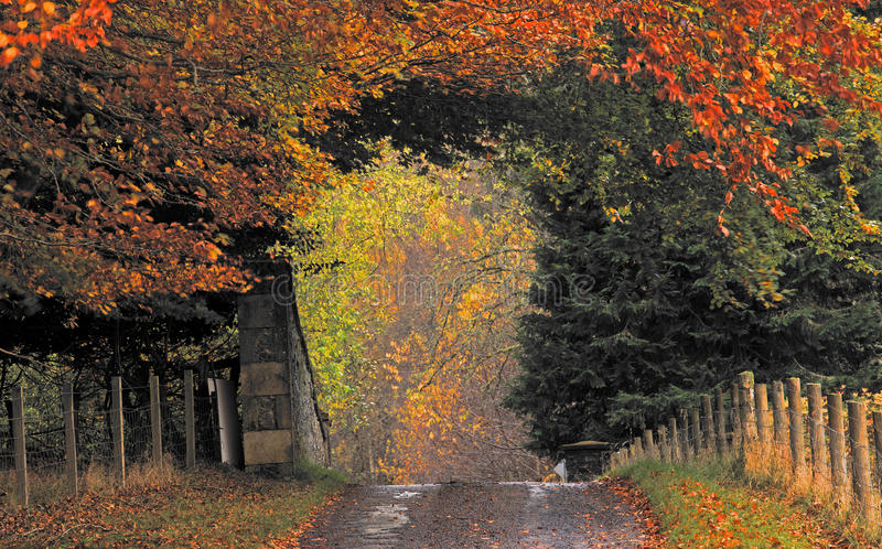 Download Country Road In Autumn Colors Stock Photo - Image: 22595050