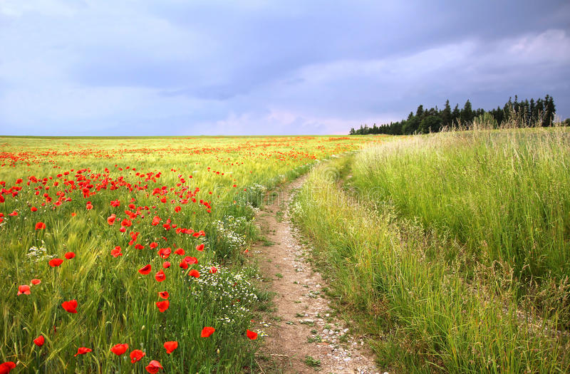 Country road through cornfield with red poppies. Against dramatic sky stock photography