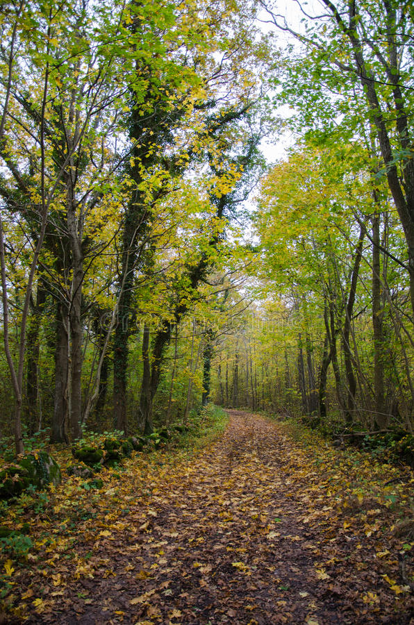 Country road in fall colors royalty free stock photo